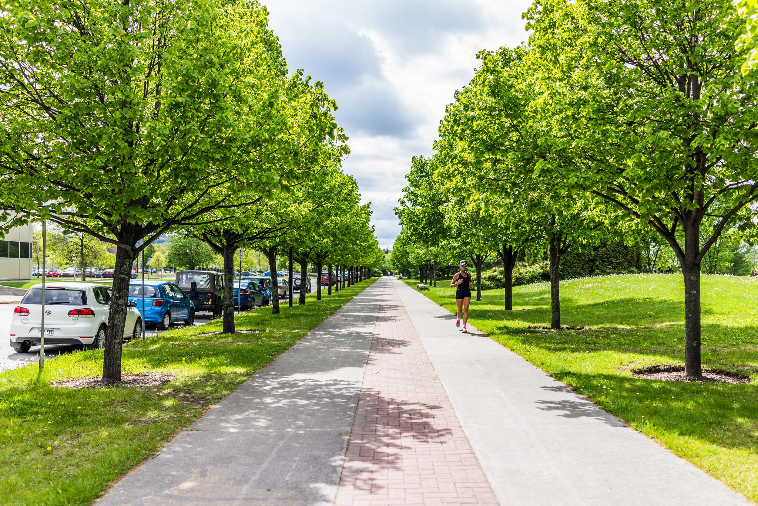 Près de 400 arbres bientôt plantés Avenue des Falaises à Val-de-Reuil !